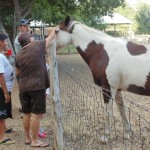 Photo of horse behind fence being petted by group of 4 people.